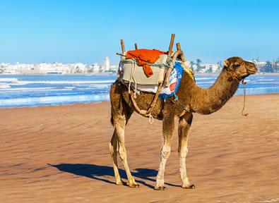 Essaouira Vol + Hôtel
