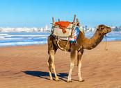 Vols pas chers Paris - Essaouira, PAR - ESU